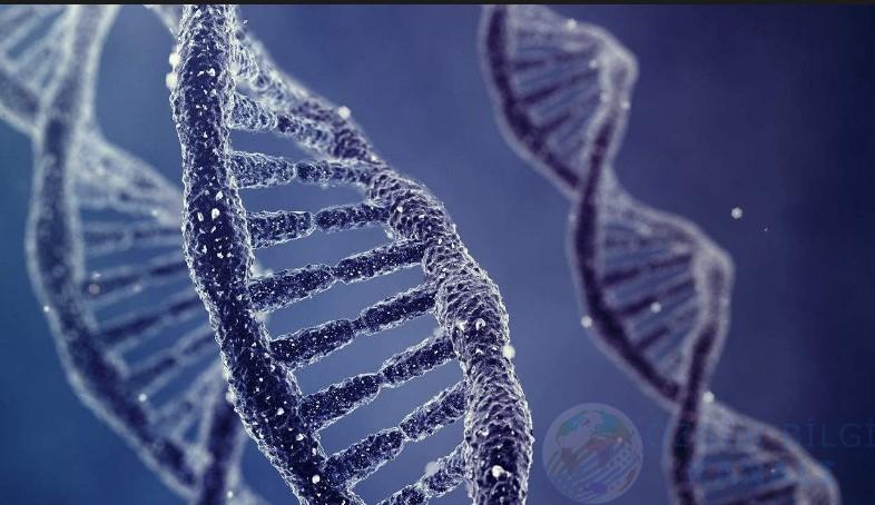 Bilim insanları DNA'ya veri yazdı